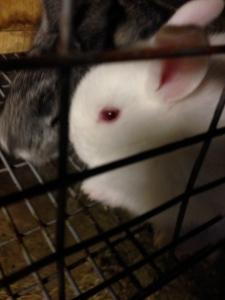 Gotta love baby bunnies!